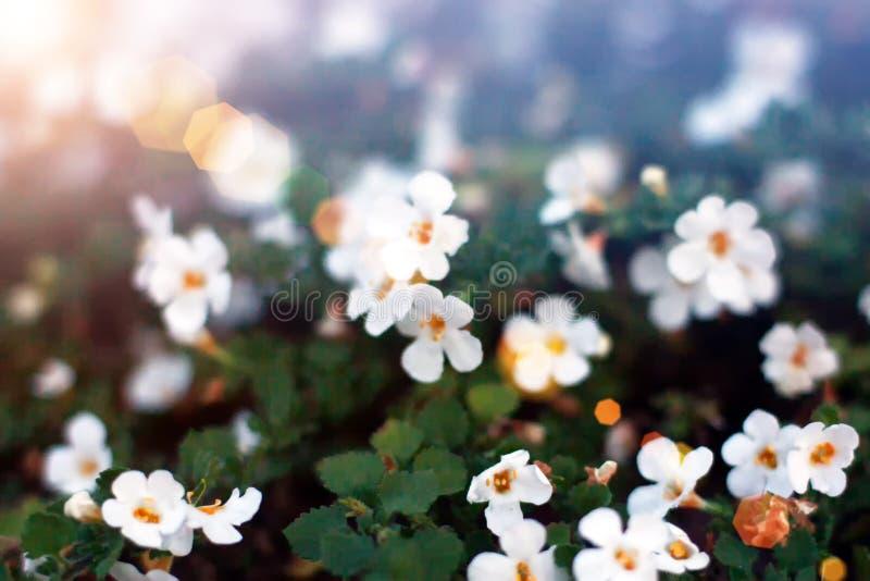 Flores minúsculas blancas en primer en fondo verde Ciérrese para arriba de floral minimalista para el arreglo floristry imagenes de archivo