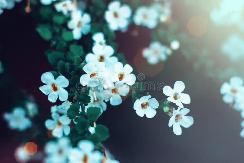 Flores minúsculas blancas en primer en fondo verde Ciérrese para arriba de floral minimalista para el arreglo floristry foto de archivo libre de regalías