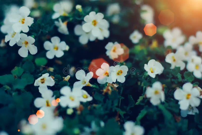 Flores minúsculas blancas en primer en fondo verde Ciérrese para arriba de floral minimalista para el arreglo floristry fotos de archivo