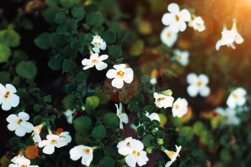 Flores minúsculas blancas en primer en fondo verde Ciérrese para arriba de floral minimalista para el arreglo floristry fotografía de archivo