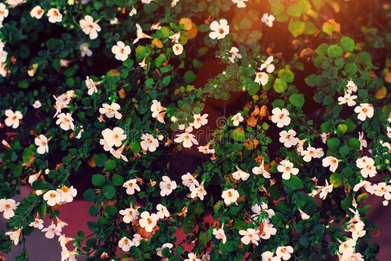 Flores minúsculas blancas en primer en fondo verde Ciérrese para arriba de floral minimalista para el arreglo floristry foto de archivo