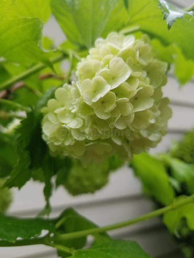 Flores molhadas foto de stock