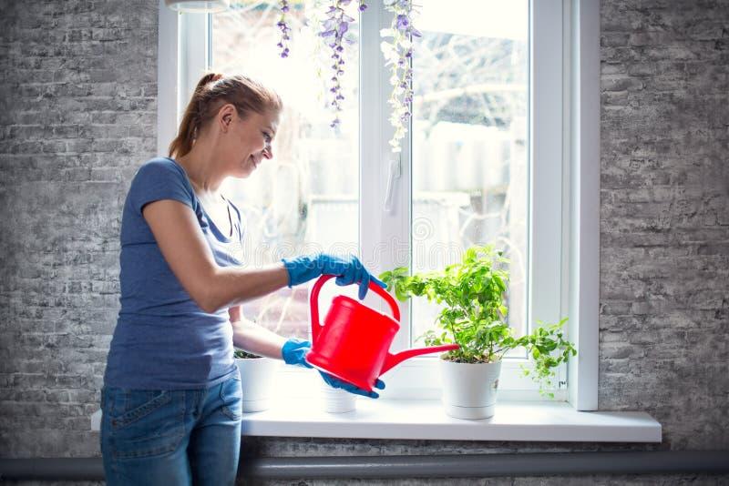 Flores molhando da mulher em casa imagens de stock royalty free