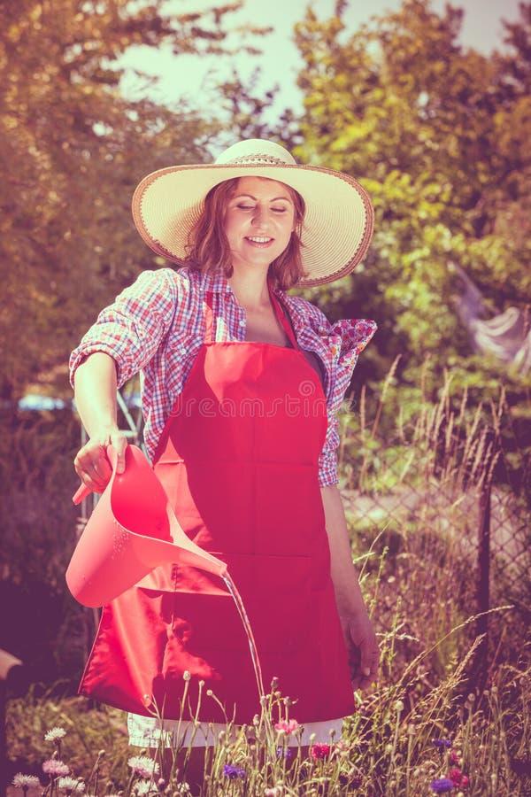 Flores molhando da mulher no jardim fotografia de stock royalty free