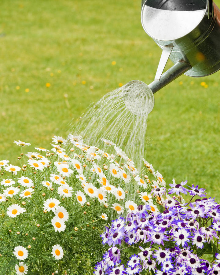 Flores molhando do verão imagem de stock royalty free