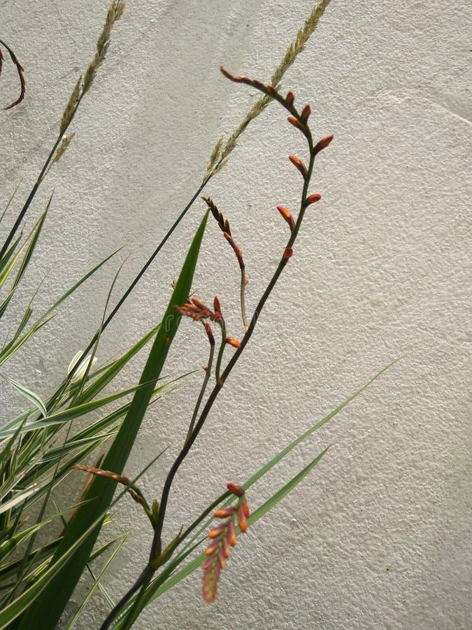 Flores montadas en la pared imagen de archivo libre de regalías