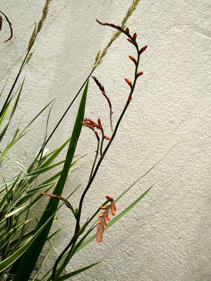 Flores montadas en la pared imágenes de archivo libres de regalías