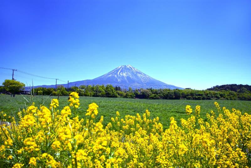 Flores & Monte Fuji amarelos imagem de stock