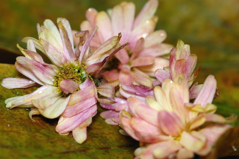 Flores muertas fotografía de archivo