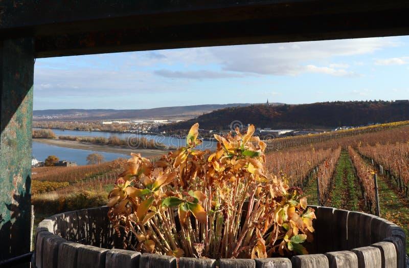 Flores muertas en un barril que pasa por alto un viñedo sobre el río Rhine en Alemania fotografía de archivo