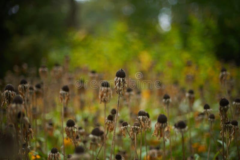 Flores murchadas vintage no campo do outono fotos de stock royalty free