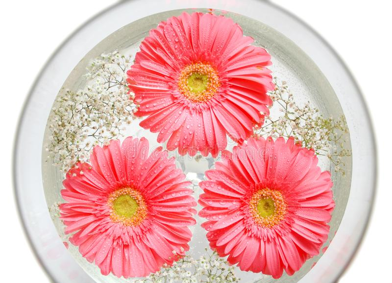 Flores na água imagens de stock