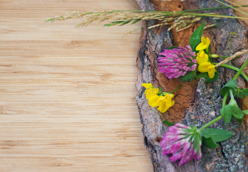 Flores na casca velha, rústica foto de stock royalty free