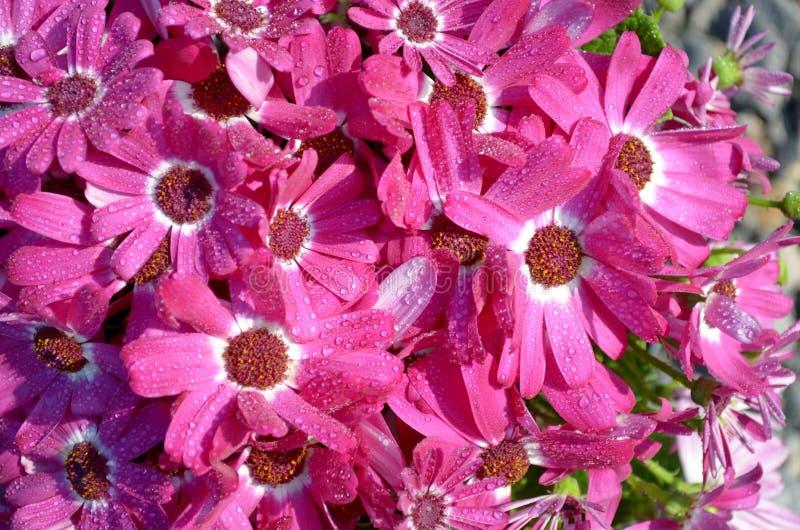 Flores na chuva imagens de stock