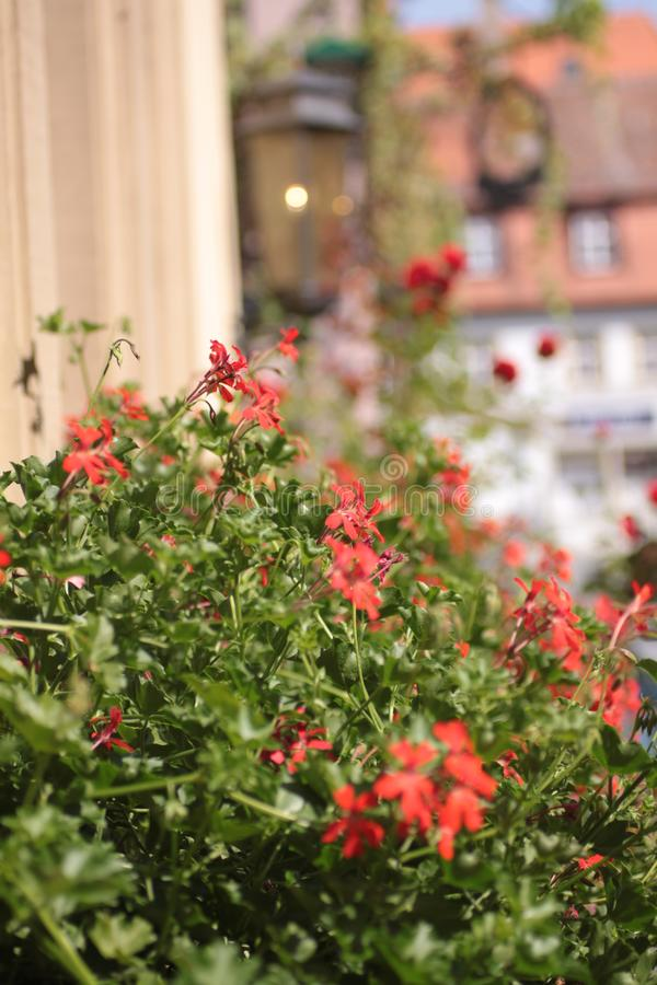 Flores na cidade fotos de stock