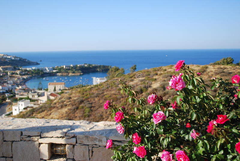 Flores na Creta fotos de stock