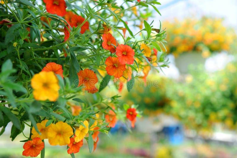 Flores na estufa fotos de stock royalty free