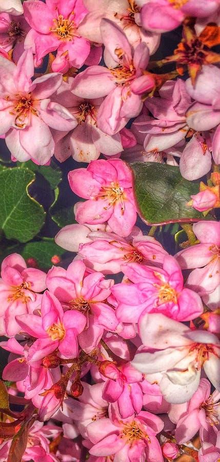 Flores na flor fotos de stock