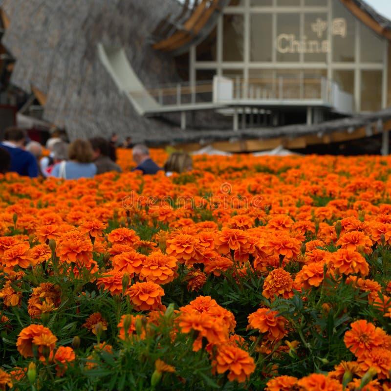 Flores na frente do pavillion de China imagem de stock royalty free