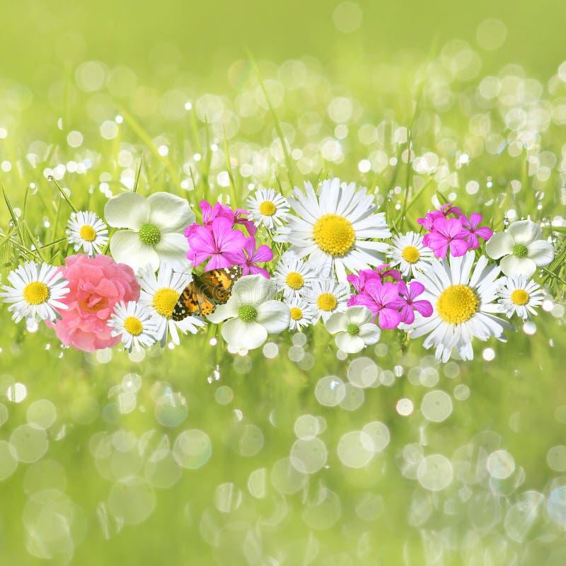 Flores na grama orvalhado foto de stock