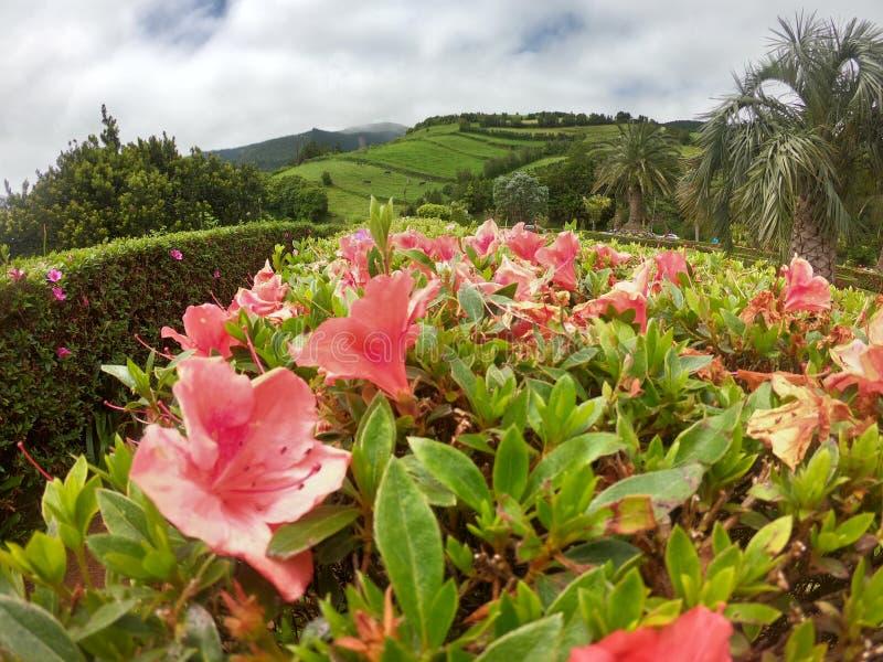 Flores na ilha verde imagem de stock