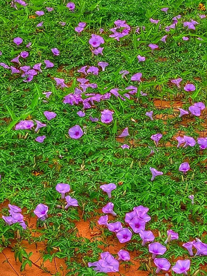 Flores na jarda foto de stock