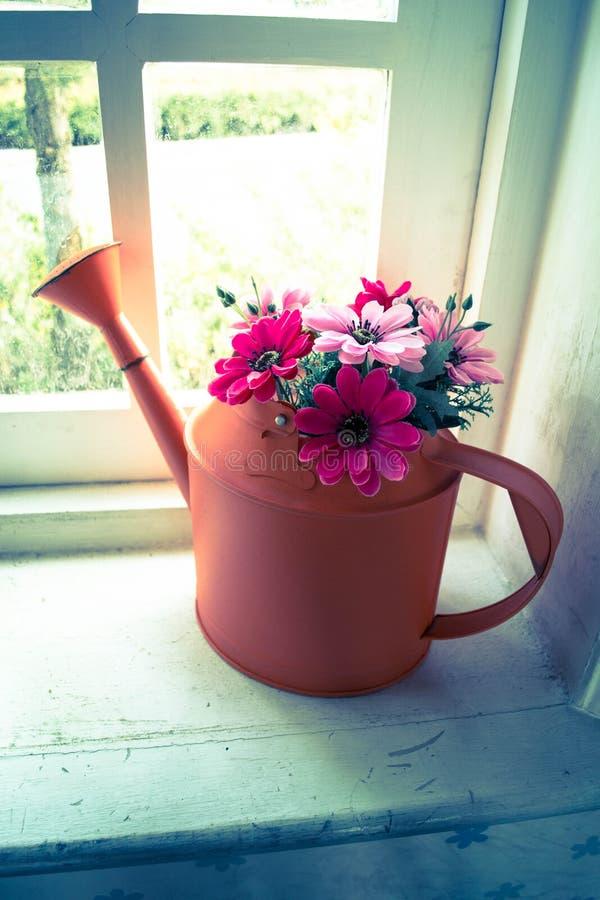 Flores na lata molhando na janela fotografia de stock royalty free