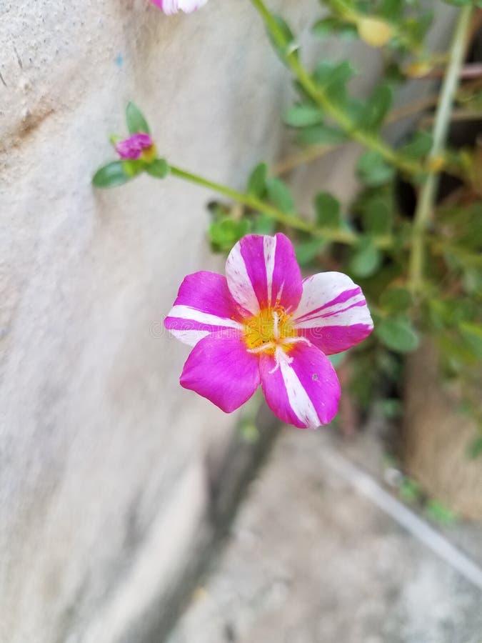 Flores na maneira fotos de stock