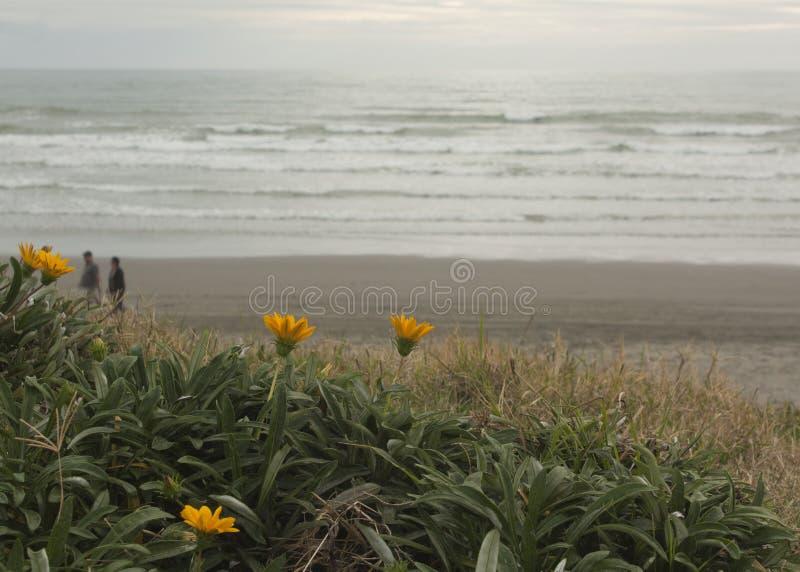 Flores na praia fotografia de stock royalty free