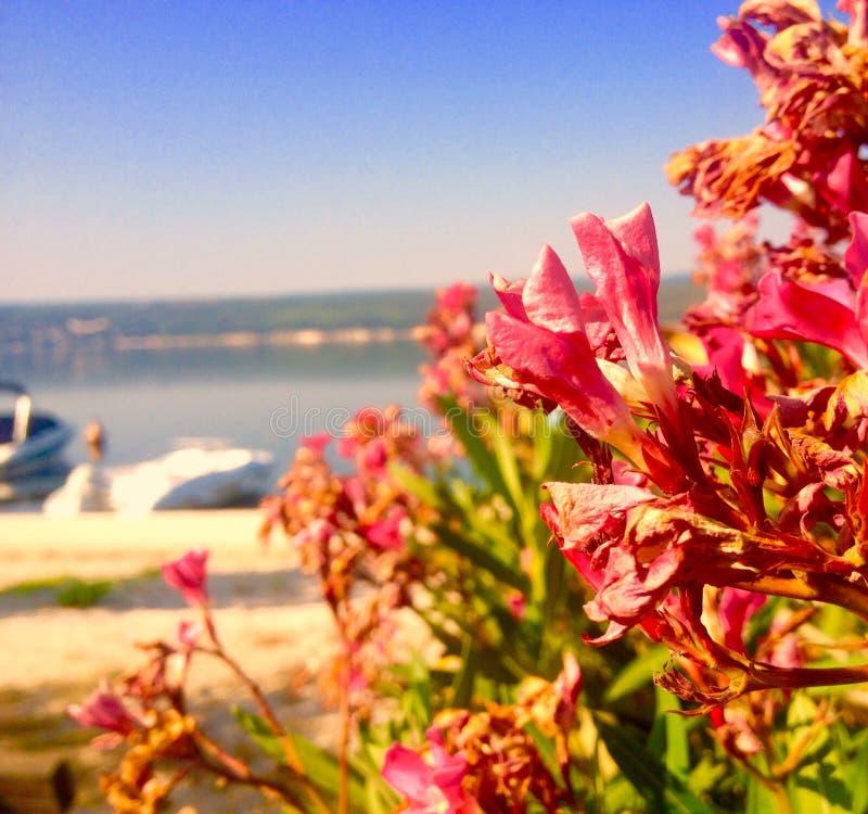 Flores na praia fotos de stock