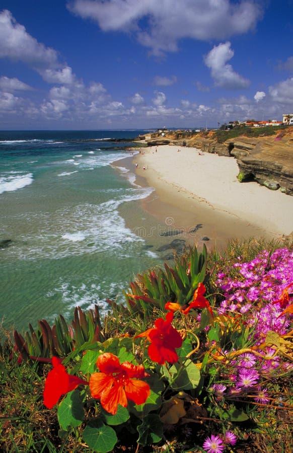 Flores na praia do Wipeout em La Jolla fotografia de stock
