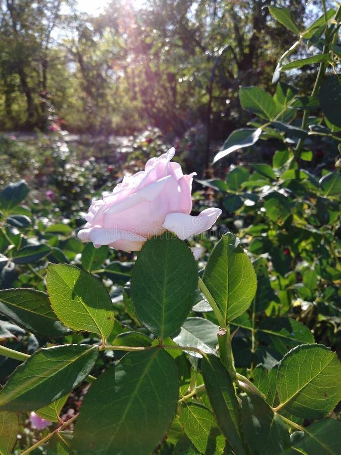 Flores na queda imagens de stock royalty free