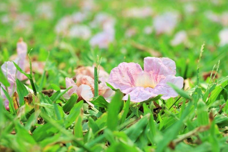 Flores na terra em um parque público fotografia de stock royalty free