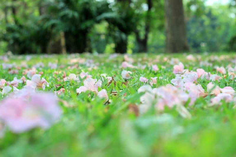 Flores na terra em um parque público imagem de stock