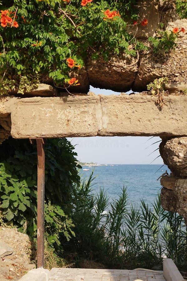Flores nas paredes de pedra Fundo da parede do Grunge com folha fotografia de stock