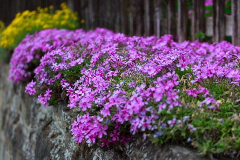 Flores nas ruas fotografia de stock