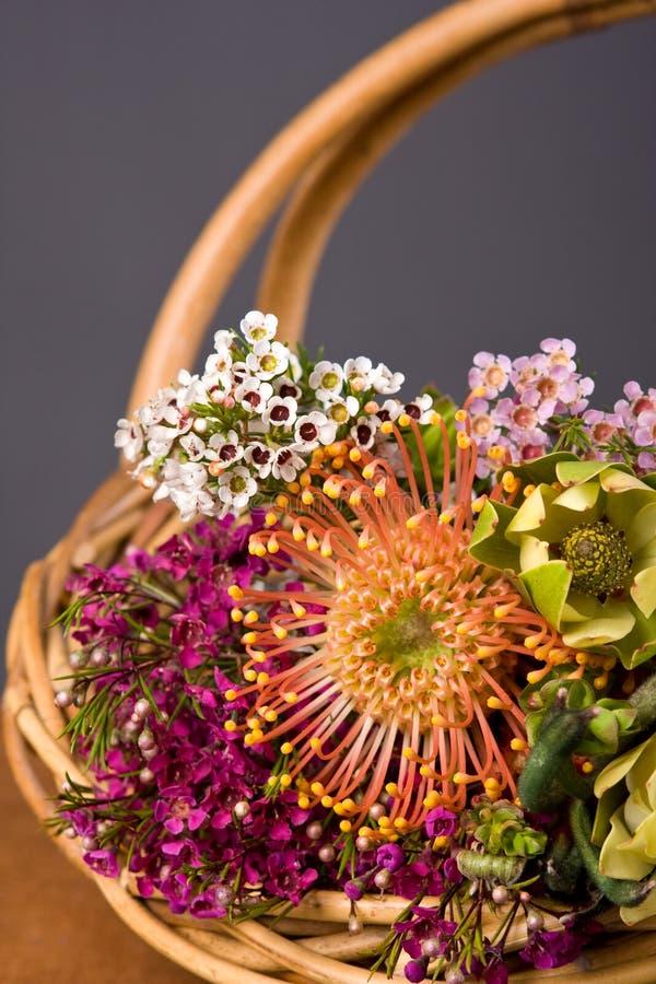 Flores nativas australianas imagem de stock