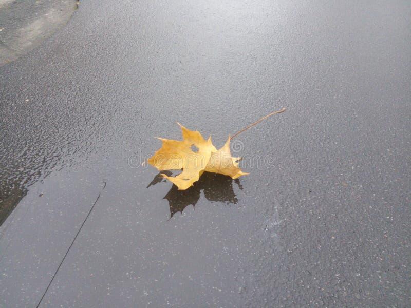Flores Natura Treegold del paesaggio di autunno fotografia stock libera da diritti