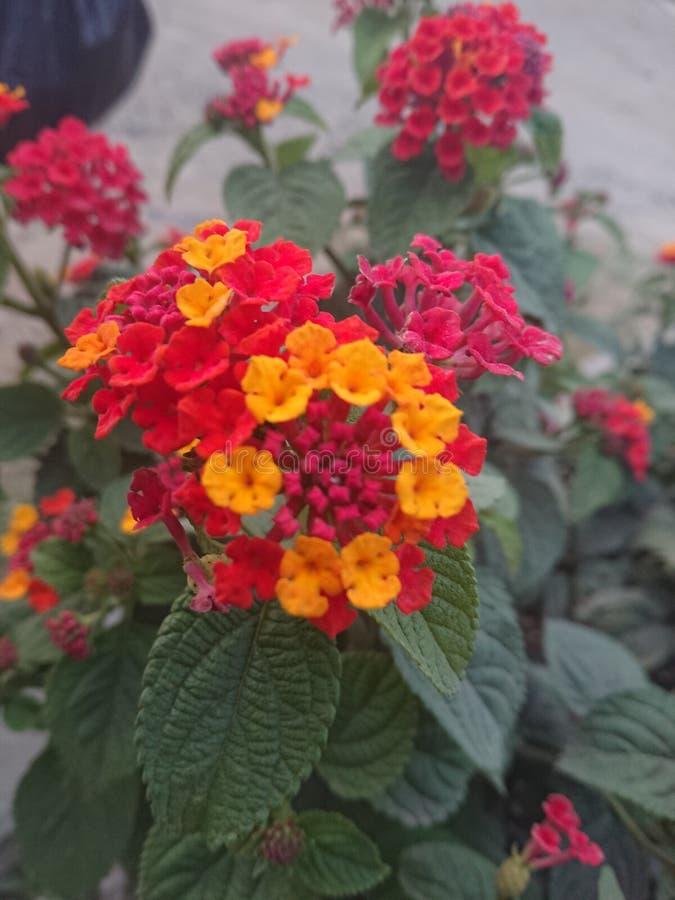 flores стоковое изображение rf