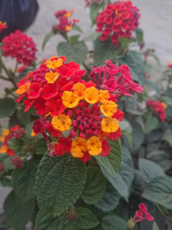 flores immagine stock libera da diritti