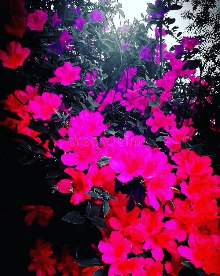 Flores ?nicas imagen de archivo libre de regalías