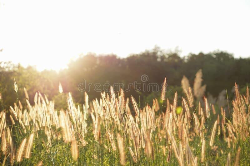 Flores no campo com luz solar fotos de stock royalty free