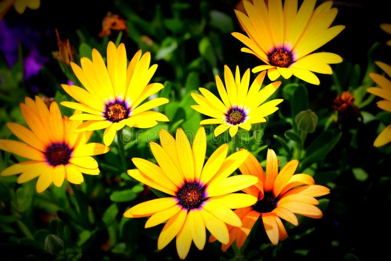 Flores no centro Montpelier da fuga de Oregon, Idaho imagens de stock royalty free