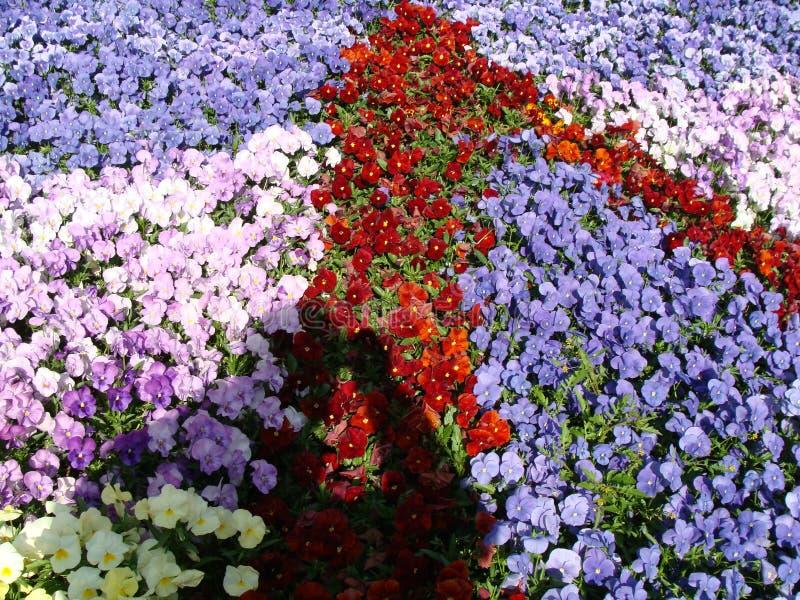 Flores no en do  do ri KÅ do  de ÅŒdÅ foto de stock