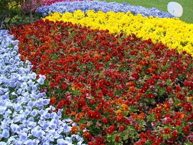 Flores no en do  do ri KÅ do  de ÅŒdÅ fotos de stock royalty free