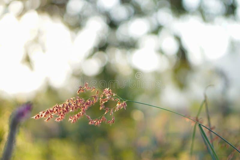 Flores no fundo borrado fotos de stock royalty free