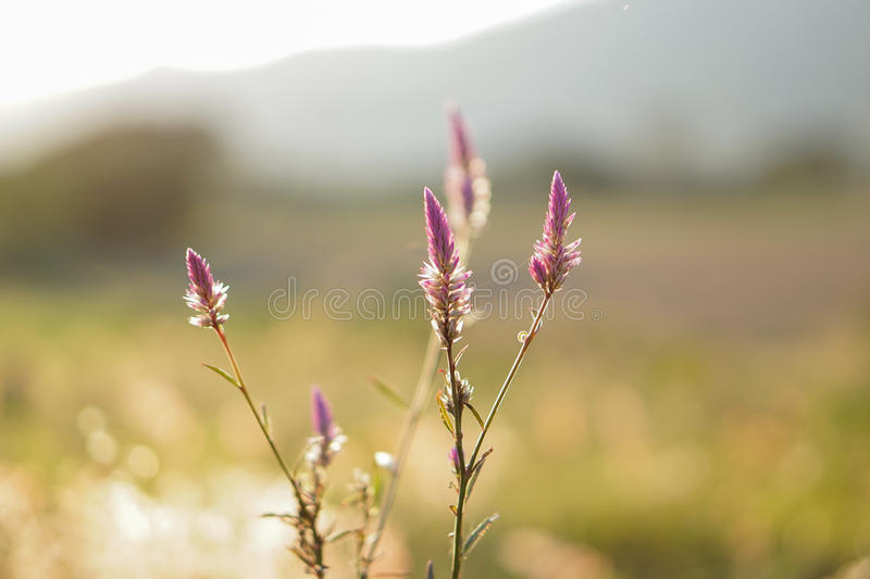 Flores no fundo borrado imagens de stock