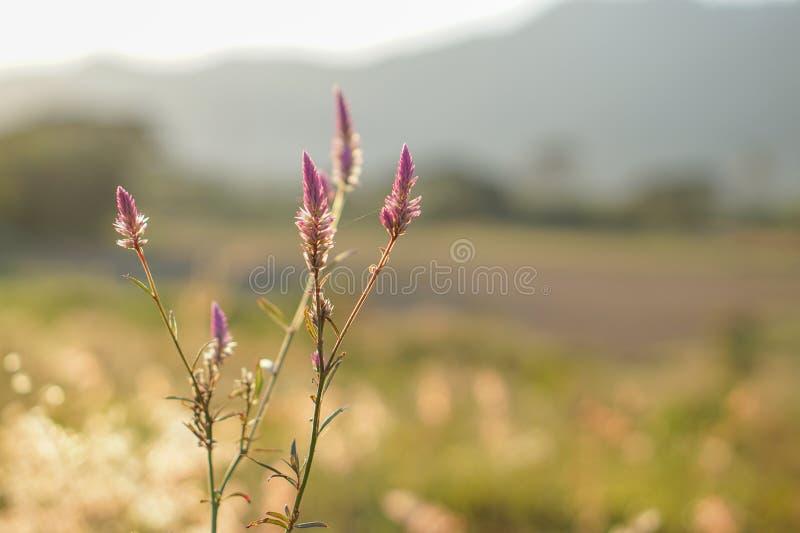 Flores no fundo borrado fotografia de stock