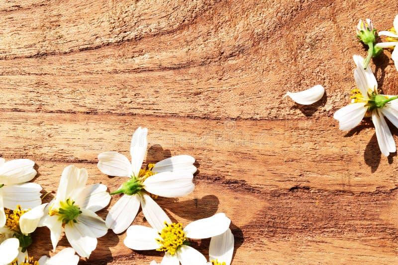 Flores no fundo de madeira fotografia de stock royalty free