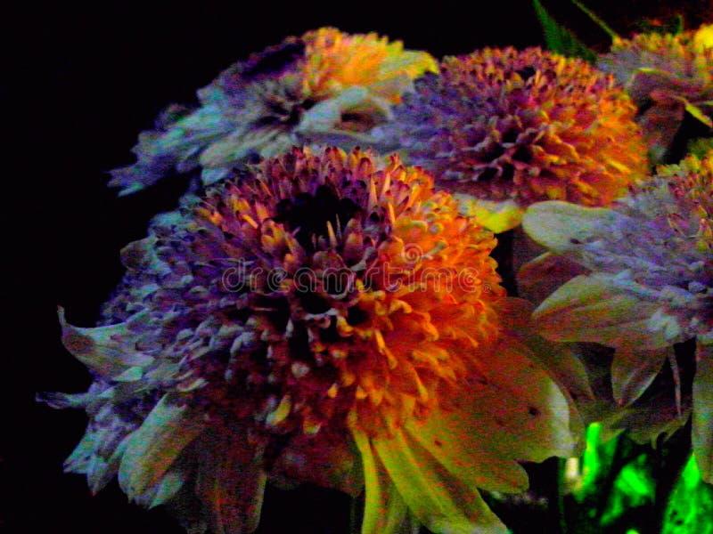 Flores no fundo escuro foto de stock